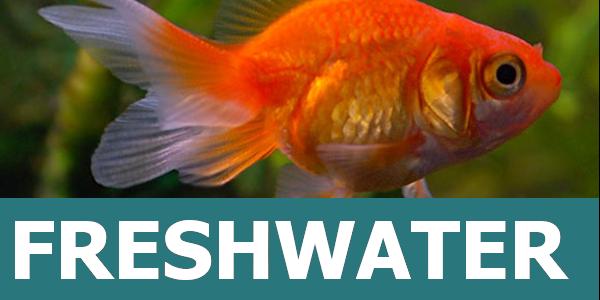 The Freshwater Fish Hub