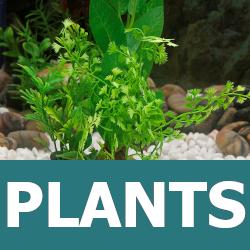 Learn about Aquarium Plants