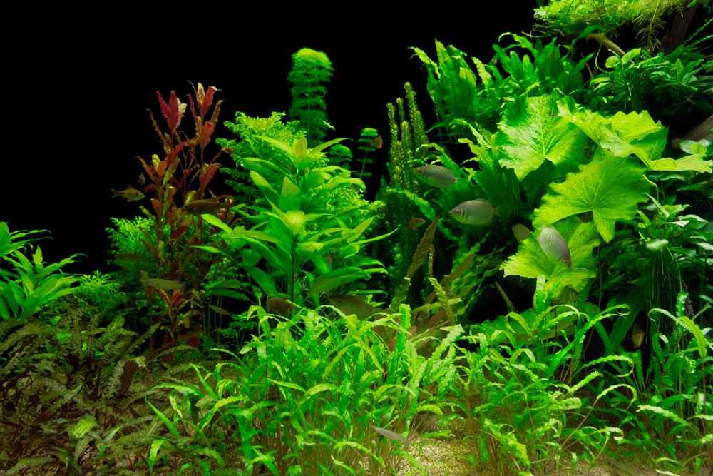Aquarium plants in a fish tank