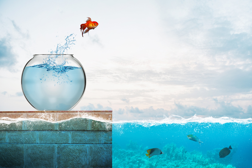 Are goldfish freshwater fish? Yes, they are. This image shows a goldfish jumping into the ocean, where it wouldn't survive long due to the saltiness of the water